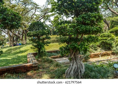 Wide view of green garden with grass, trees, plants, shadows and pathway, Chennai, Tamil nadu, India, Jan 29 2017