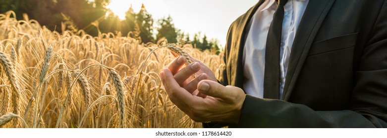 Wide view image of a businessman cupping a ripe ear of wheat holding it in front of the fiery orb of the rising sun in a conceptual image of business start up.