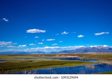 Wide view of the marsh at Alamosa National Wildlife Refuge with Blanca Mountain and the Sangre de Cristo range in the background