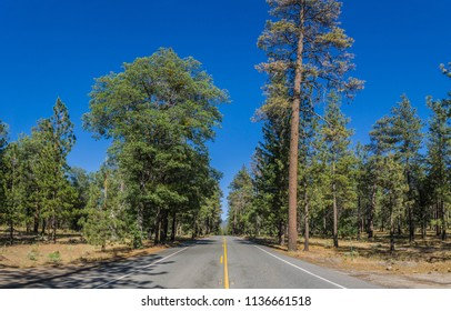 Wide view of a southern California pine forest in the mountains above Los Angeles.