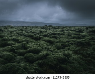 wide wild moss field in Iceland with a dramatic cloudy sky and mountains in the misty background with a moody atmosphere during a rainy day dwith a grey background and green foreground