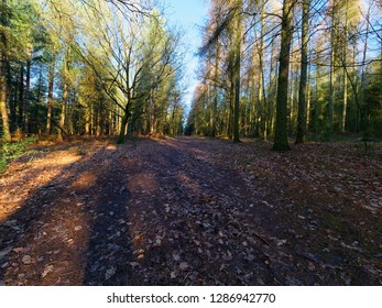 A wide woodland footpath passes between rows of tall trees lit by the low winter sun.