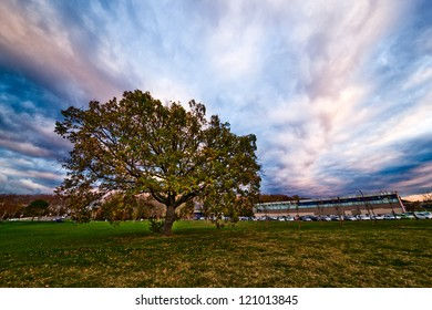 Wide-angle evening autumn photo of an oak and a building
