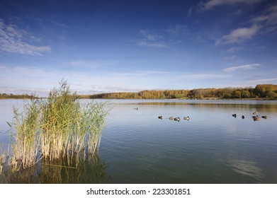 Wide-angle photograph of a large lake flanked by trees in their autumn leaves on a sunny day. A number of ducks are swimming on the lake.