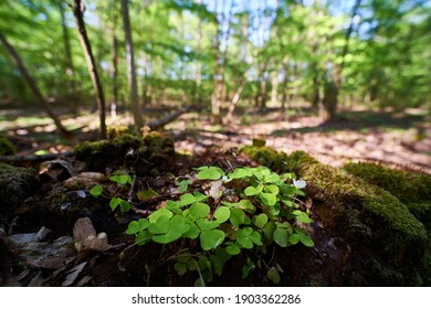 Wideangle scene of leaves in forest