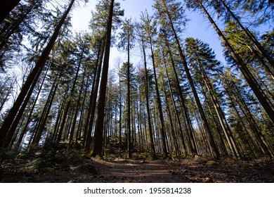 A wideangle shot of a beautiful forest in Austria