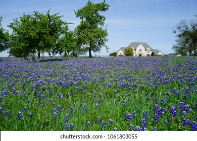 Wide-Angle view of a large country home with Bluebonnet wildflowers in full bloom during spring time around the Texas Hill Country, USA