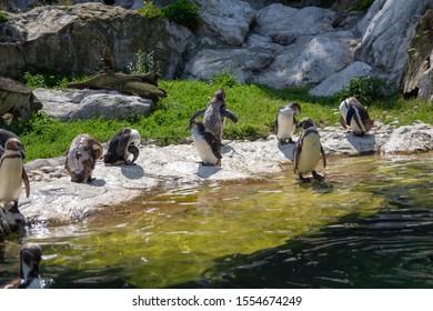 Wien, Austria - July 13 2018: Tiergarten Schönbrunn's animals in the zoo