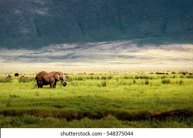 Wild African elephant in the Ngorongoro crater in the background of mountains.
