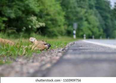 Wild animal accident on the main road