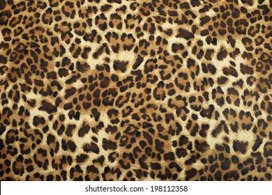 wild animal pattern background or texture