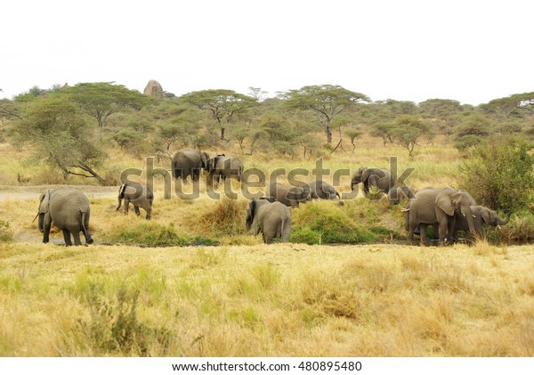 Wild Animals Africa Their Environment Group Stock Photo (Edit Now ...