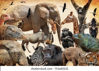 Wild Animals Birds And Reptiles Elephant Wildebeest Giraffe Onager Lizard