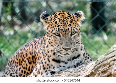 Wild animals with blur background