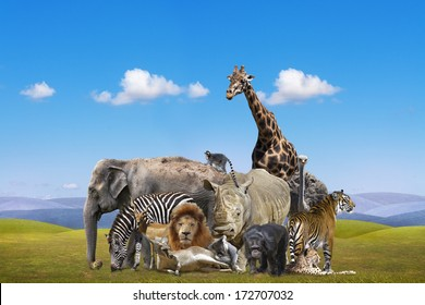 Wild Animal Collage Images Stock Photos & Vectors