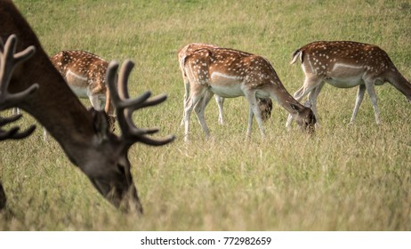 Wild animals on a meadow