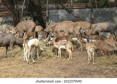 Wild animals in zoo