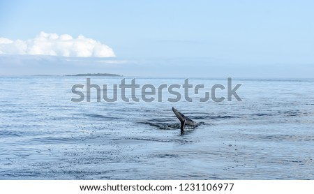 wild-atlantic-bottlenose-dolphin-tursiop