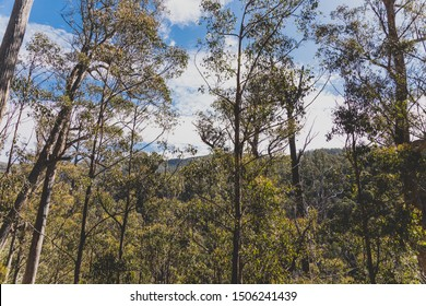 wild Australian bush during a hike in Tasmania with its untouched landscape featuring eucalypus and ferns