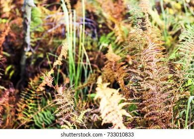 wild autumn forest fern for background