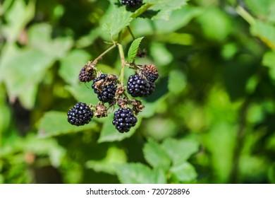 Wild autumn forest fruits