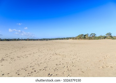 Wild bald and  by wind moving sand drifts the Soester Duinen in the  Dutch province of Utrecht on a ridge  called the Utrechtse heuvelrug cover sand areas occur in the ice age