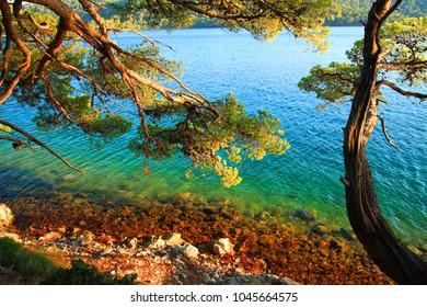 Wild beach in pine forest, Island Mljet, Croatia