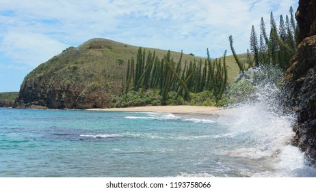Wild beach with pine trees in New Caledonia, Grande Terre island, Bourail, south Pacific, Oceania