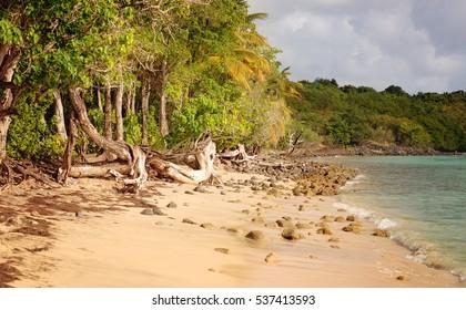 Wild Beach in the Pointe Borgnese Natural Site, near Marin, Martinique, Caribbean