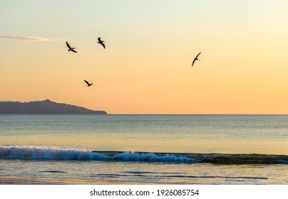 Wild beautiful birds - pelicans fishing in the ocean in sunset with big waves beach Playa Flamingo in Guanacaste, Costa Rica. Central America.