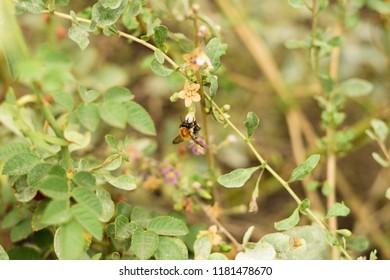 Wild bee on flower