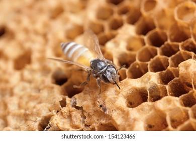 wild bees macro shot  in honeycomb