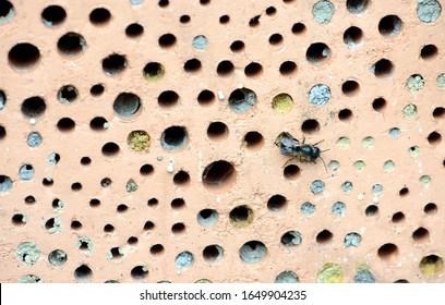 Wildbienen auf Insektenhotel aus rotem Ziegelstein mit Nistlöchern.