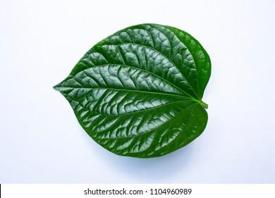 Wild betel leafbush or Piper sarmentosum roxb isolated on white background, Green leaves pattern