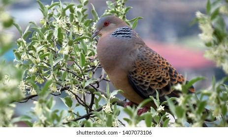 A wild bird found in south asia, perched on a tree in Bhutan.