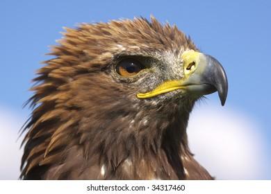 wild bird on the Alb in Germany