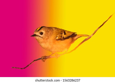 wild bird on a colorful bright background