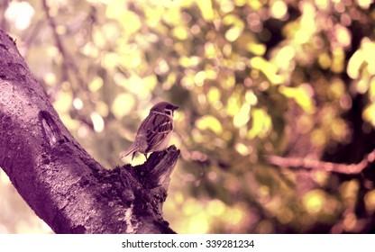 Wild bird on tree in grass