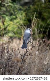 A wild bird sitting on the branch