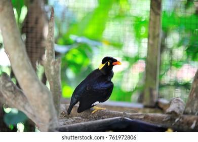 wild birds of borneo