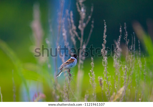 Wild birds of Natural Flower Garden