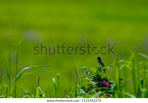 Wild birds of Natural Flower Garden
