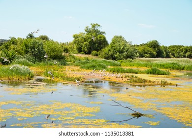 Wild birds nesting by lake - Nature reserve in UK, Europe