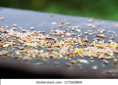 Wild Birdseed on an outdoor table