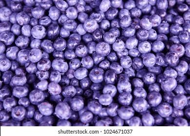 Wild blackberries fruits detail. Healthy food background.
