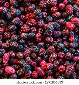 Wild blackberries in a variety of colours as a background texture