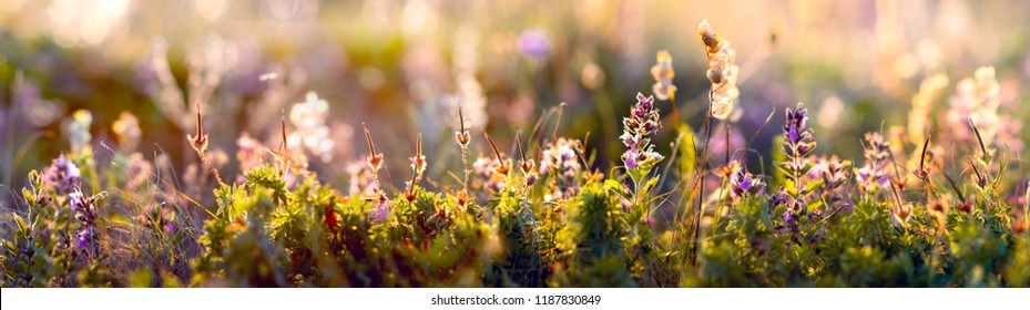 wild blue flowers and grass closeup, horizontal panorama photo