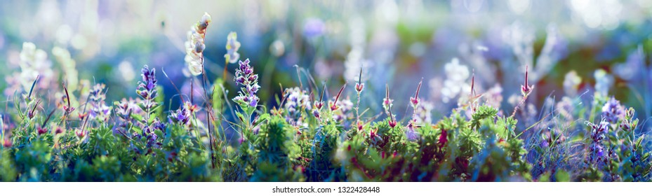 wild blue flowers and grass closeup, wide horizontal panorama photo