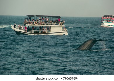 Wild blue whale tail diving deep, indian ocean. Wildlife nature background. Tourist impression. Adventure travel, tourism industry. Mirissa, Sri Lanka. Protection concept. Explore world. Attraction