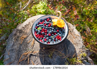 Wild blueberries and lingonberries with chanterelle mushroom in bowl on stump in forest. Foraging on berries is a tradition of Scandinavia. Natural organic food picked up in the wild of Nordic forest